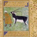 Mughal Paintings from the V&A