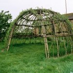 Living willow dome